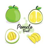 Pomelo φρούτα διανυσματική απεικόνιση