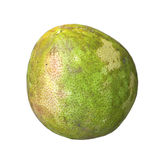 Pomelo (Citrus maxima or Citrus grandis) Royalty Free Stock Photo