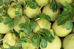 Pomelo fruit  sold in the market in Thailand. Background Royalty Free Stock Image
