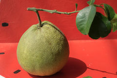 Pomelo fruit  sold in the market in Thailand. Royalty Free Stock Photo