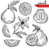 Pomelo fruits set Royalty Free Stock Photo