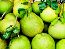 Pomelo. Grapefruit is a fruit that is versatile and also has medicinal properties to treat various diseases Royalty Free Stock Photos