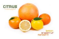 Pomelo, mandarina, limón, anaranjado Fotografía de archivo