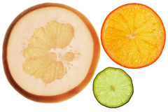 Pomelo, orange and lemon Royalty Free Stock Image