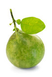 Pomelo, Pummelo, Pommelo(Citrus maxima or Citrus grandis), on white Royalty Free Stock Photos