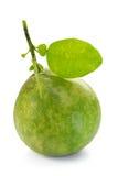 Pomelo, Pummelo, Pommelo na bielu, (cytrusów maksimumy lub cytrusów grandis) Zdjęcia Royalty Free