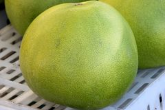 Pomelo, pummelo, Shaddok, Citrus maxima. C. grandis, largest citrus fruit often reaching 25 cm, with thick rind and white sweet pulp Stock Photos