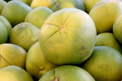 Pomelo, pummelo, Shaddok, Citrus maxima. C. grandis, largest citrus fruit often reaching 25 cm, with thick rind and white sweet pulp Royalty Free Stock Image