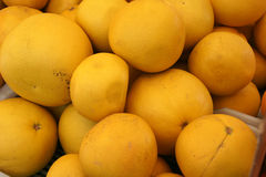 Pomelo, pummelo, Shaddok, Citrus maxima Stock Photos