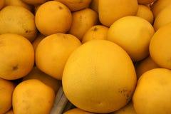 Pomelo, pummelo, Shaddok, Citrus maxima Stock Images