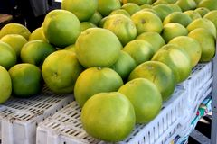 Pomelo, pummelo, Shaddok, Citrus maxima. C. grandis, largest citrus fruit often reaching 25 cm, with thick rind and white sweet pulp Stock Photo