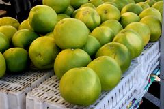 Pomelo, pummelo, Shaddok, Citrus maxima. C. grandis, largest citrus fruit often reaching 25 cm, with thick rind and white sweet pulp Royalty Free Stock Photos
