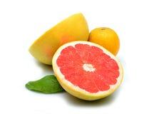 Pomelo y limón aislados en el fondo blanco Imagenes de archivo