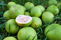 Pomelos Foto de Stock