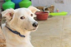 Pomeranian作为Dober被命名的十字架狗 库存照片