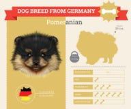 Pomeranian dog breed  infographics Stock Image