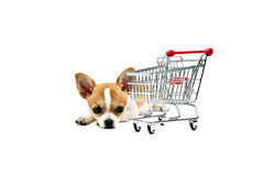 Pomeranian dog next to an empty shopping cart. Over white Royalty Free Stock Photos