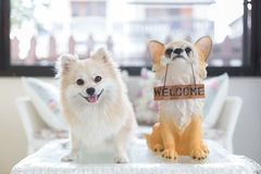 Pomeranian dog puppy standing on a table with a puppy doll holds `welcome` sign panel in the mouth. stock images