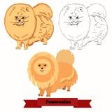 Pomeranian-Hundevektorillustration Stockbilder