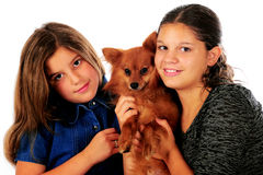 Pomeranian Pals Royalty Free Stock Photos