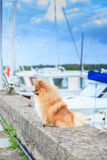 Pomeranian parapet quay on the background of yachts  Royalty Free Stock Photography
