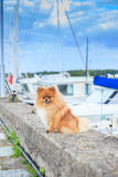 Pomeranian parapet quay on the background of yachts  Royalty Free Stock Images
