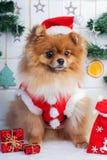 Pomeranian in santakleding op een achtergrond van Kerstmisdecoratie stock afbeeldingen