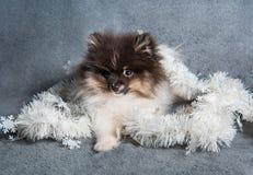 Pomeranian-Spitz-Hundewelpe in den Girlanden auf Weihnachten oder neuem Jahr stockbild