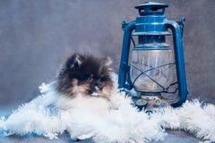 Pomeranian-Spitz-Hundewelpe in den Girlanden auf Weihnachten oder neuem Jahr lizenzfreie stockfotos
