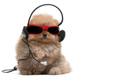 Pomeranian spitz in red sunglasses and headphones Stock Photo