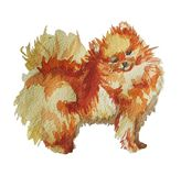 Pomeranian Spitz in watercolor vector illustration