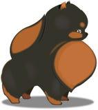 Pomeranian. Vector pomeranian Black & Tan colour Vector Illustration