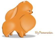 Pomeranian. Vector pomeranian orange colour for use logo or clipart Royalty Free Illustration