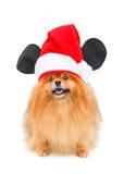 Pomeranianhond met Kerstmishoed Royalty-vrije Stock Fotografie