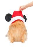 Pomeranianhond met Kerstmishoed Stock Fotografie