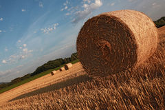 Pomeriggio caldo di estate nel campo raccolto immagini stock libere da diritti