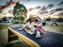 Pomeriggio del parco del cane Immagini Stock Libere da Diritti