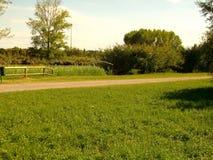 Pomeriggio soleggiato del parco Fotografia Stock