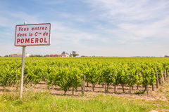 Pomerol vineyard. In Bordeaux, with Cabernet Sauvignon and Merlot grapes Royalty Free Stock Image