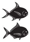 Pomfret Fish Royalty Free Stock Photos