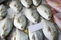 Pomfret fishes cover with ice on sell Stock Images