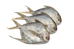 Pomfret fishes Royalty Free Stock Photography