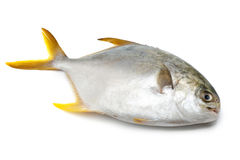 Pomfret Stock Photos, Images, & Pictures - 410 Images