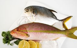 Pomfret and snapper. Pomfret and fresh snapper on plate stock photo