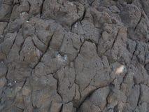 Pomice sulla spiaggia Fotografia Stock