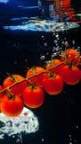 pomidor Zdjęcia Stock