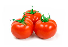 pomidor Zdjęcie Royalty Free