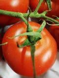Pomidor czeka szansę stać za! zdjęcia stock