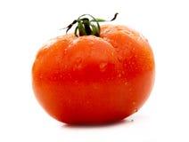pomidor czerwony Obraz Royalty Free