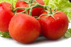 pomidor czerwony Zdjęcia Stock